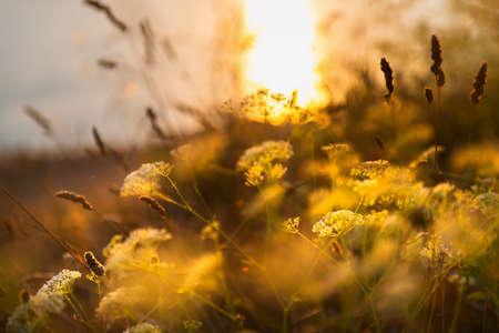 Wild grasses on the sea coast at sunset. Macro image, shallow depth of field. Beautiful autumn nature background Reklamní fotografie