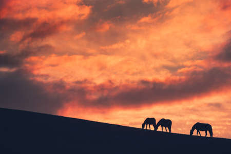 Horses graze on the hill at sunset. Silhouettes of horses against the purple sky with clouds. Beautiful autumn landscape. Gil-Su valley in North Caucasus, Russia