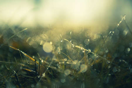 Green grass with morning dew at sunrise. Macro image, shallow depth of field. Blurred summer nature background Zdjęcie Seryjne