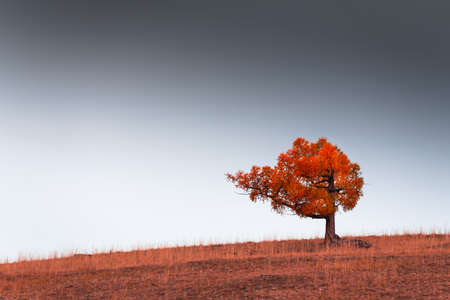 Red autumn tree on the hill against the sky. Beautiful autumn nature background