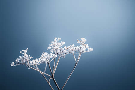 Frosted plants on the shore of lake in misty morning. Macro image, shallow depth of field. Blurred nature background