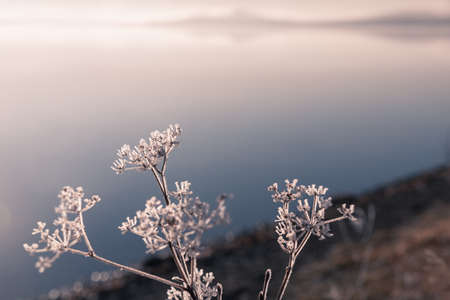 Frosted plants on the shore of lake at misty sunrise. Macro image, shallow depth of field. Blurred nature background Zdjęcie Seryjne