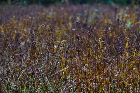 whimsical shapes on a meadow in autumn