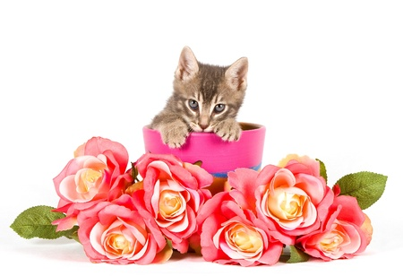 Kitten with roses. photo