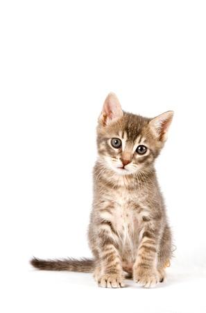 Isolated kitten.