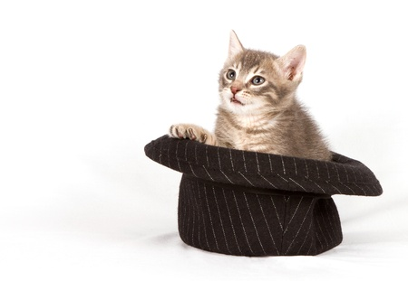 Cat in a hat. photo