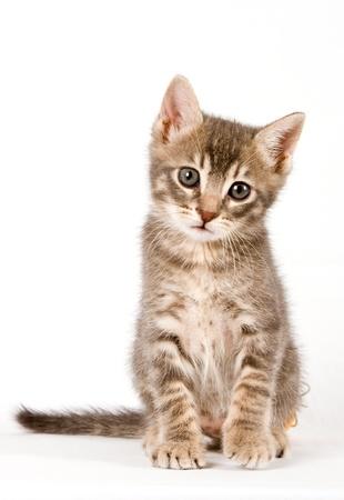 cats: Gattino. Archivio Fotografico
