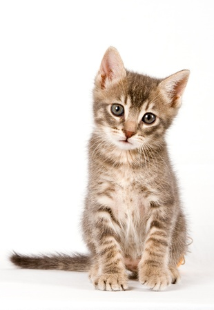 kotów: Kitten.