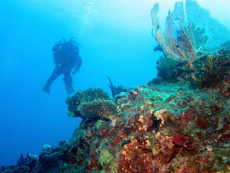 Scuba diving in the Red Sea, Egypt photo
