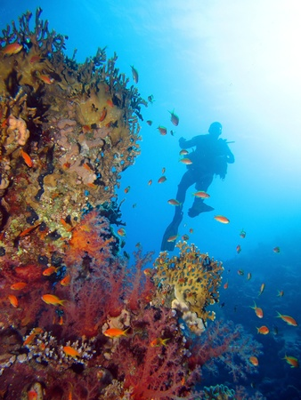 Scuba diving in the Red Sea, Egypt