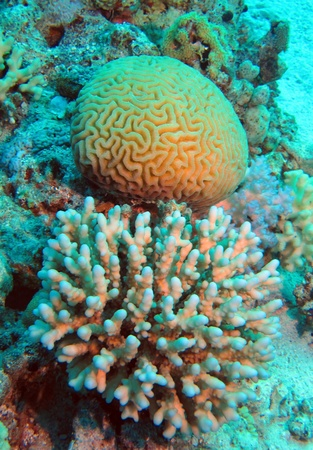 Corals of Red Sea Stock Photo - 14217249
