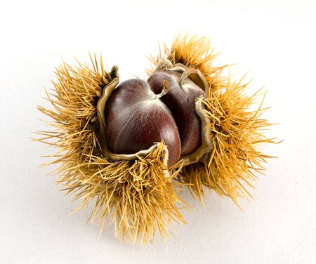 Chestnut photo