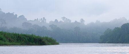 Jungle of Borneo, Malaysia Stock Photo - 18218318