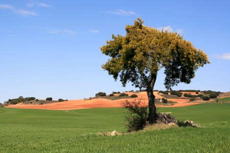 cuenca: Tree in Cuenca, Spain Stock Photo