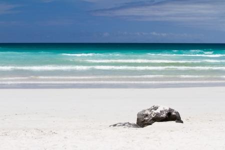 トルトゥーガ ベイ、サンタ クルス島ガラパゴス