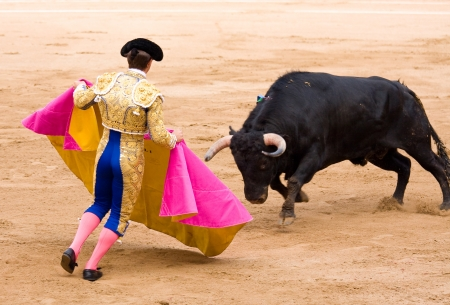 bullfighting: BARCELONA - JUNE 6: Julian Lopez, El Juli, in action during a bullfight, typical Spanish tradition where a bullfighter kills a bull, on June 6, 2010 in Barcelona, Spain