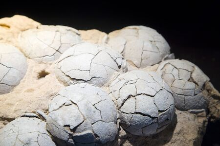 Therizinosaurus dinosaur eggs, Late Cretaceous