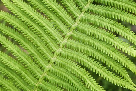 Fresh fern leaf beautiful texture close-up macro Imagens