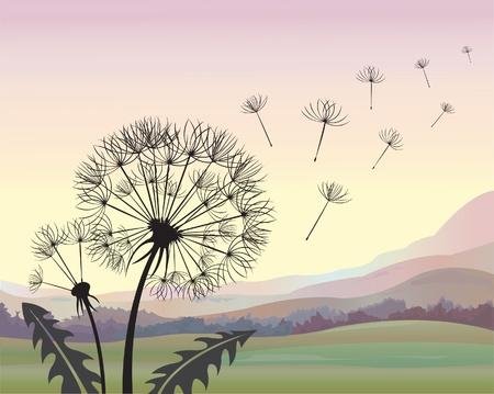 dandelion seed: Silhouette dandelion