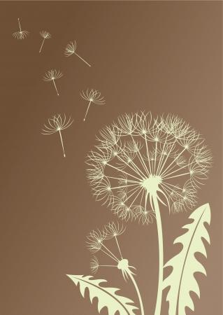 seeds: Silhouette dandelion
