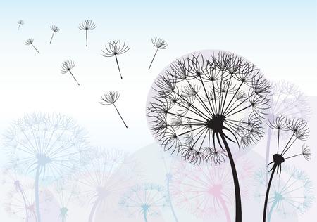 black seeds: Silhouette dandelion