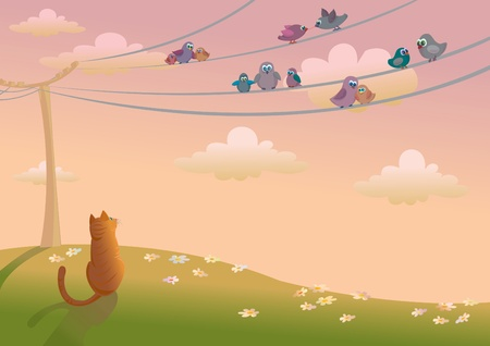 birds on a wire: Orange cat looking to a birds sitting on an electrical wires