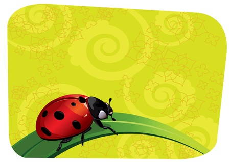 Red ladybug crawling on a leaf on a green background Stock Vector - 9660396