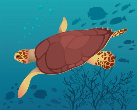 Big turtle in sea Vector
