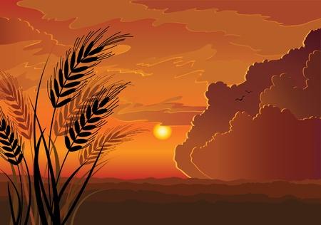 soir�e: Vecteur coucher de soleil paysage avec la silhouette de seigle, la colline et le fond rouge ciel nuageux