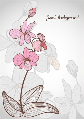 botanical branch: Summer vector with bloom pink orchid on a gray background Illustration