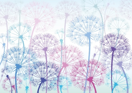 gentle background: Vector colored dandelions on a blue background Illustration