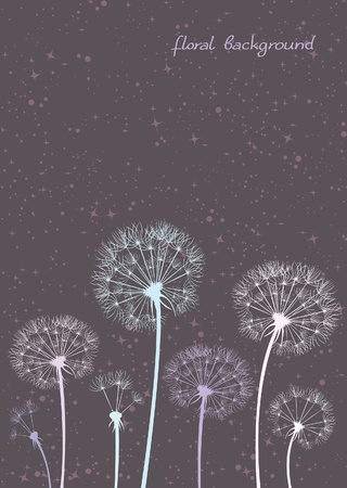 dandelion flower: Vector colored dandelions