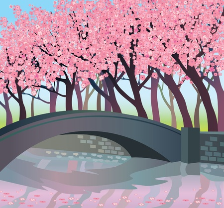 Landscape with pink japanese trees and bridge