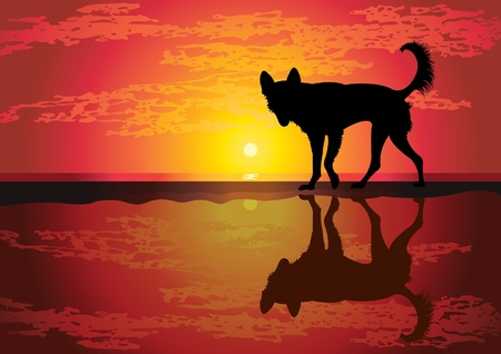 Silhouette of funny dog walking on a tropical beach Vector