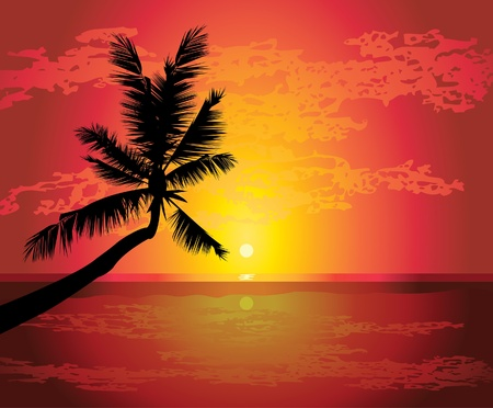 tranquility: Silhouette of palm on a tropical beach