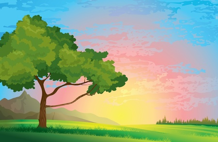Green summer tree and meadow on a sunset cloudy sky background Vector