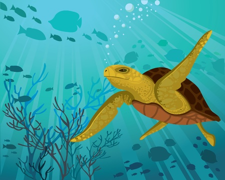 aquatic reptile: Turtle on a silhouettes of fish and sun rays in a sea