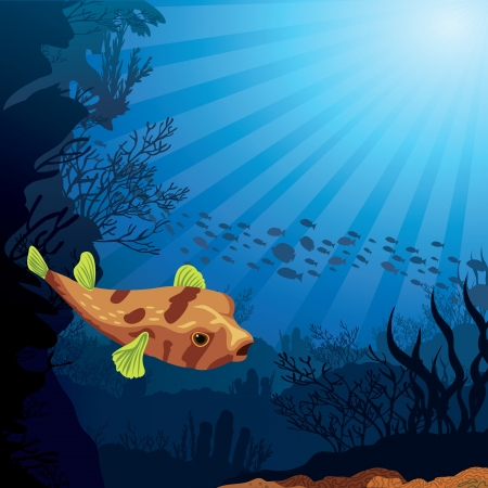 puffer fish: Colored coral reef with puffer and silhouette of fish on blue sea background