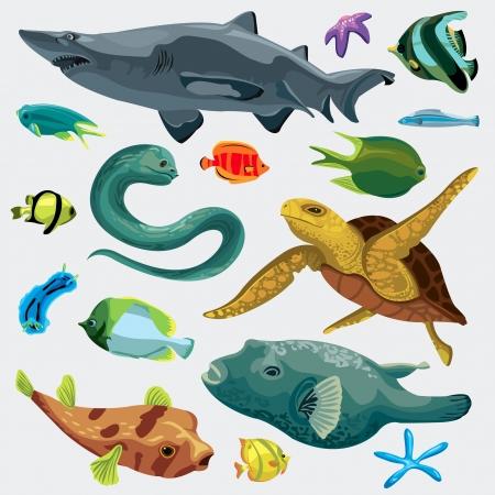 peces de acuario: Animal set peces: pez globo, peces, tiburones, tortugas, anguilas mooray, nudibranquios, estrellas