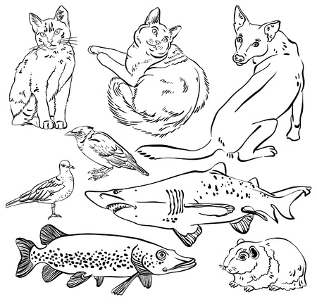 pike: Sketch of animal set - cat, dog, guinea pig, bird, pike, shark Illustration