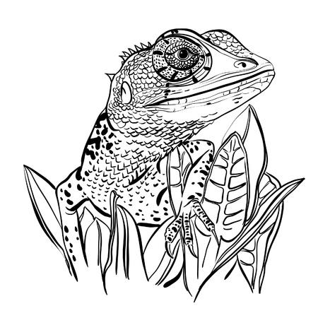 sauri: Schizzo di una lucertola seduto su un foglie su uno sfondo bianco
