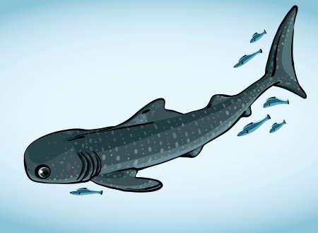 gray whale: Cartoon funny gray whale shark and blue fish on a white background
