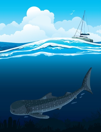 coral fish: Gray whale shark swims under white boat on a blue sea background   Illustration