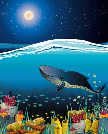 Nature seascape with coral reef with floating whale and night starry sky over surface Vector
