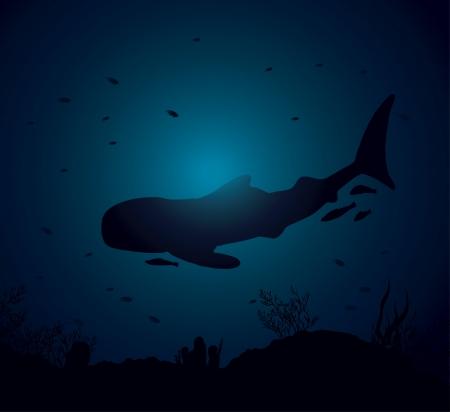 ballena azul: Silueta de tiburón ballena y el arrecife de coral en un mar azul
