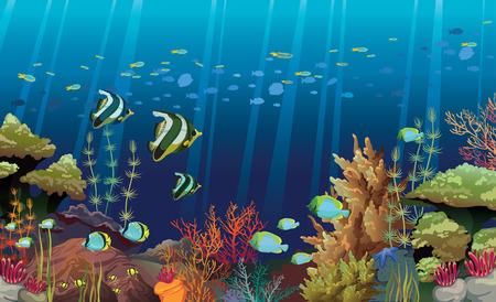 algas marinas: Los arrecifes de coral con criaturas marinas naturaleza subacuática