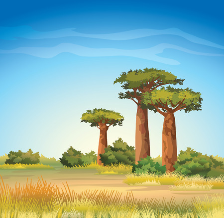 Green baobabs and yellow grass on a blue sky. African natural landscape.