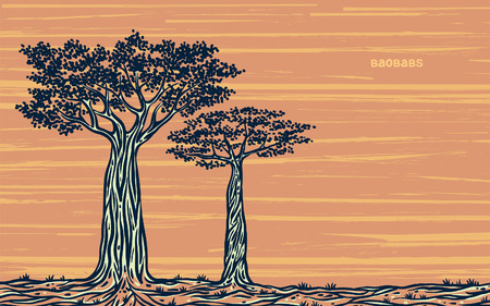 baobab: Silhouette of two graphic baobabs on a yellow background. Vector skethc of Madagaskar. Illustration
