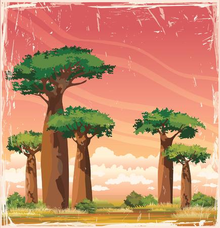 Sunset landscape vector: Thiên nhiên phong cảnh Phi - baobabs với tán lá xanh trên bầu trời mây hoàng hôn. Vector của Madagascar.