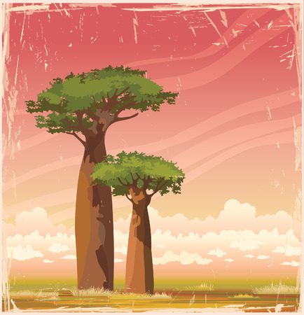 baobab: Two baobabs with green foliage on a sunset sky. Nature african landscape. Vector of Madagascar. Illustration